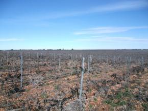 Efectos de la gestión de los viñedos sobre la abundancia de aves enItalia