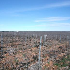Efectos de la gestión de los viñedos sobre la abundancia deaves