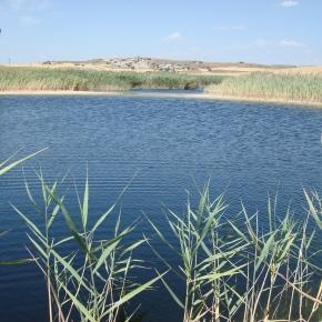 El cambio climático reduce la capacidad de los ecosistemas acuáticos para absorber CO2 ymetano