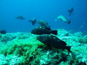 Boletín Mayo 2017: conservación de la biodiversidad marina, cómo escapar de los depredores y la relación incendios-biodiversidad