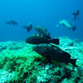 Una adecuada financiación mejora la efectividad de las áreas marinasprotegidas