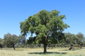 La importancia de los árboles aislados para la conservación de labiodiversidad