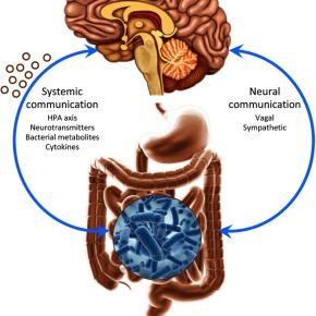 ¿Existe relación entre la flora intestinal y elcomportamiento?