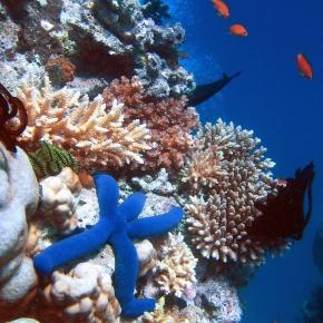Las regiones con mayor biodiversidad marina son las más afectadas por pesca y cambioclimático