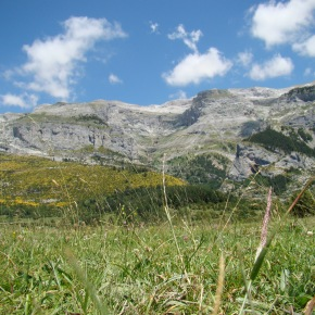 ¿Reciben los países con mayor biodiversidad más fondos para suconservación?