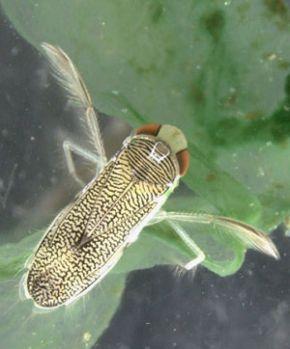 Las invasiones biológicas modifican la coexistencia de las especiesnativas