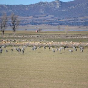 Migraciones: naturaleza en todo suesplendor