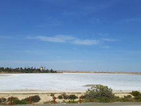 Cuando la vida conquista la sal: la evolución en los ríossalinos