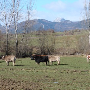 La gestión de la tierra: clave para reducir el 37% de las emisiones deCO2