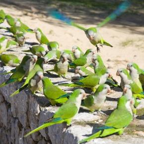 ¿Qué factores determinan el éxito en la invasión de avesexóticas?