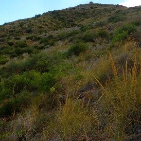 El aumento de la aridez disminuirá la abundancia y diversidad de microorganismos delsuelo