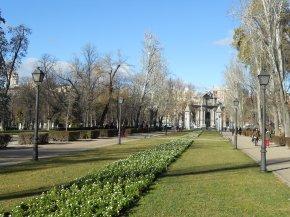 Los árboles urbanos aportan salud yriqueza