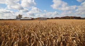 Suelos sanos y diversos para una agricultura mássostenible