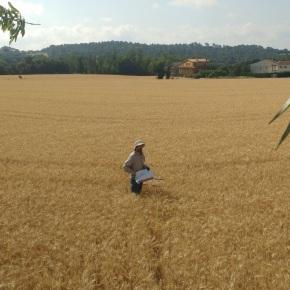 Intensificación ecológica: mejorar la producción agrícola a través de labiodiversidad