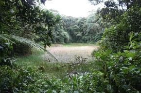 Estudiando los bosques del pasado para proteger los delfuturo
