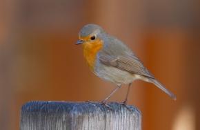 El GPS de las aves, ¿misterioresuelto?