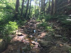 Los últimos supervivientes: microorganismos de los ríosintermitentes