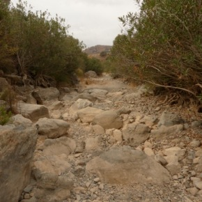 La importancia de los ríos temporales en el ciclo delcarbono