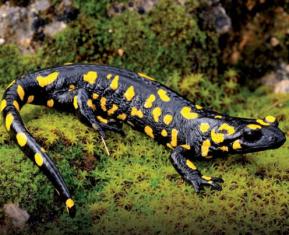 Paz Parrondo: protegiendo los anfibios del suresteibérico