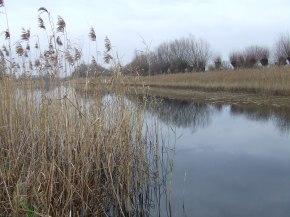 Los suelos de los humedales actúan como depuradorasnaturales