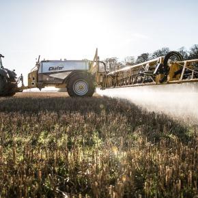El herbicida más usado del mundo perjudica a las abejas al dañar su floraintestinal