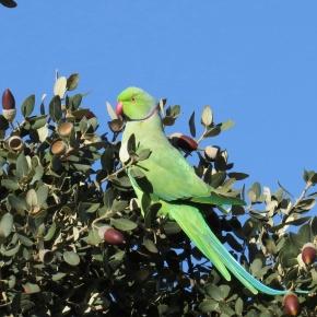 El lucrativo comercio de especies exóticas y su conexión con las invasionesbiológicas
