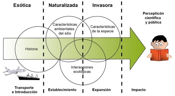 InvasionProcess