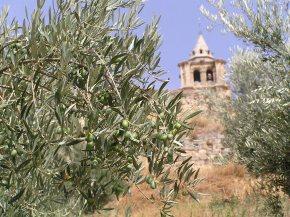 Ecología molecular para proteger a los olivos frente a Xylellafastidiosa