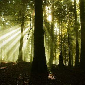 Bosques que producen mucho más quemadera