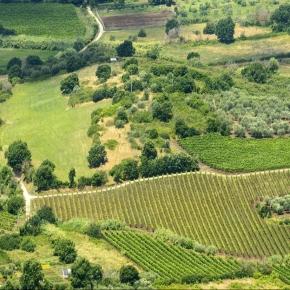 La agricultura ecológica reduce los patógenosalimentarios