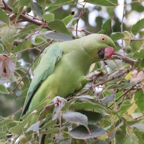 Gestión de especies invasoras: la importancia de evaluar la percepciónsocial