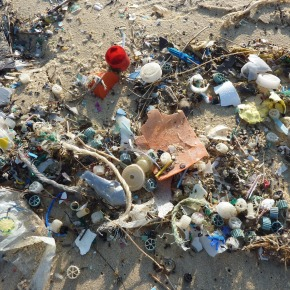 """""""¡Qué bien, tan mal!"""": La contaminación por plásticos estimula el crecimientobacteriano"""