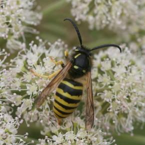 La reducción del tamaño de los insectos se podría deber al cambioclimático