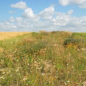 Las prácticas agrícolas que favorecen la biodiversidad mejoran el rendimiento de lacosecha