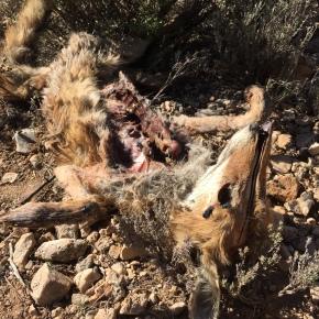 """""""Perro no come perro"""" II: el papel crucial de los insectos en la eliminación decadáveres"""