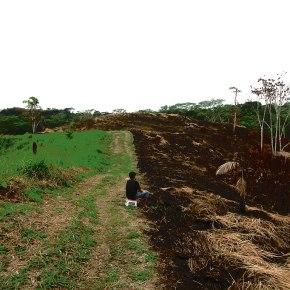 Deforestación y coronavirus: los cimientos de unapandemia
