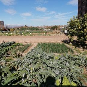 Potencial productivo de la agricultura urbana y riesgos para lasalud
