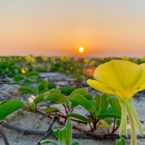Las plantas que escuchan y responden a lasabejas
