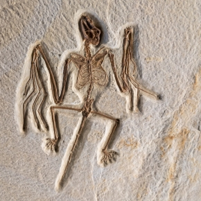 El misterioso origen del vuelo en losmurciélagos