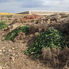 El elevado coste ambiental de desperdiciaralimentos