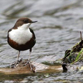 La biodiversidad invisible que mantiene a peces y aves carismáticas en losríos