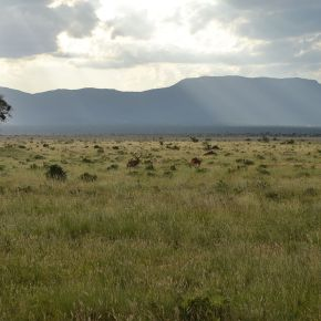 Los suelos de pastizales muestran un potencial de secuestro de carbono mayor que los debosques