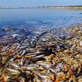Mar Menor: eutrofización de intereses, anoxiacientífica
