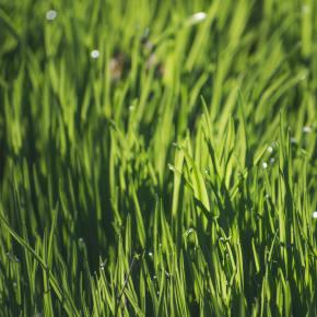 La diversidad de plantas aumenta la cosecha y mitiga lasequía